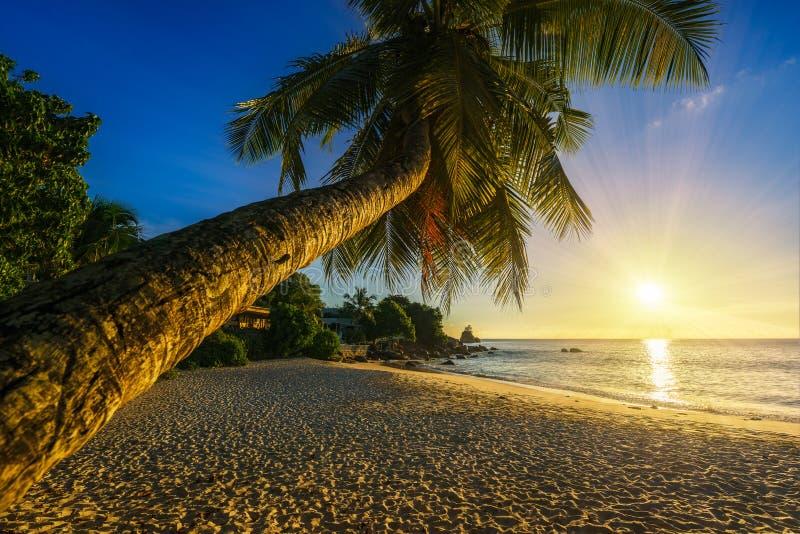 与一棵棕榈在天堂,塞舌尔群岛的美好的浪漫日落是 库存照片