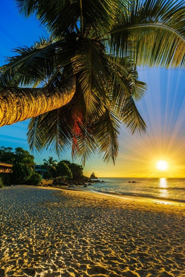 与一棵棕榈在天堂,塞舌尔群岛的美好的浪漫日落是 库存图片