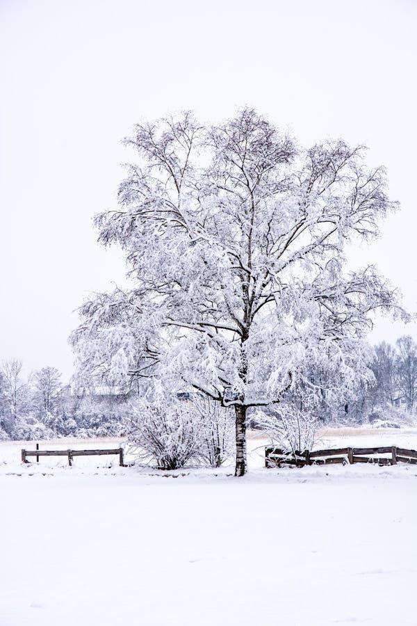 与一棵结霜的树的冬天风景 库存图片