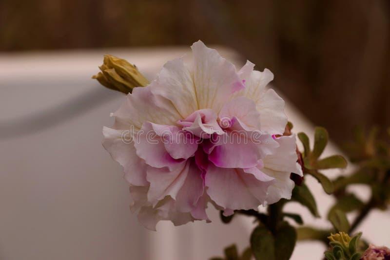 与一片非常不同的树荫的美丽的花 免版税库存照片