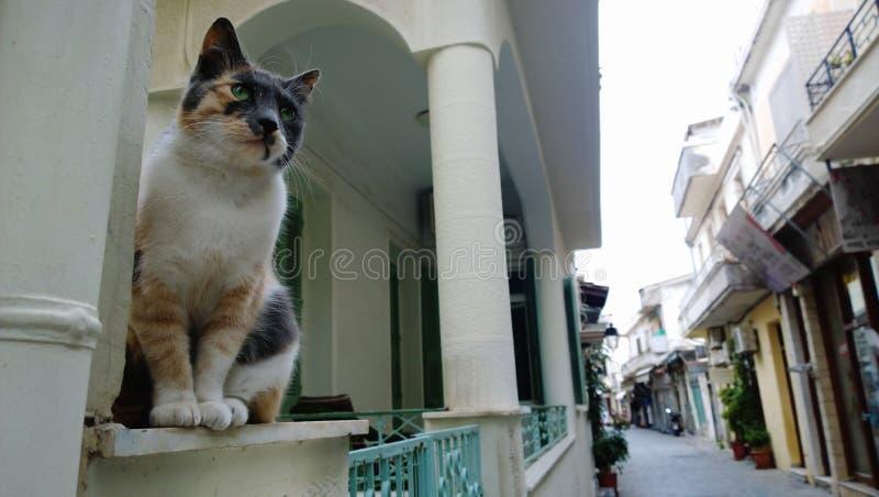与一种美好的白红色灰色颜色的一只离群猫 猫作为雕象坐讲台和检查离开的街道 免版税库存图片