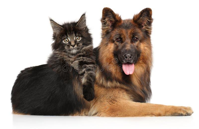 与一起狗的猫在白色背景 免版税库存照片