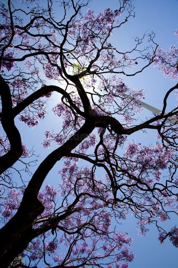 与丁香色的花的结构树 图库摄影