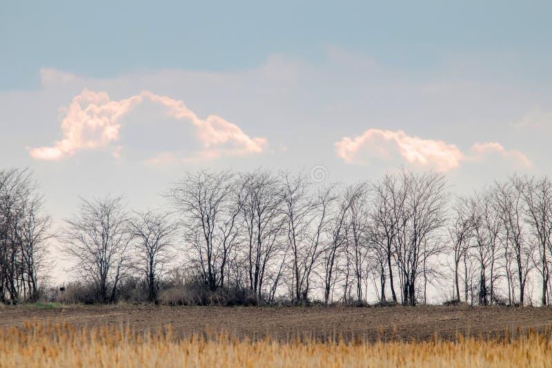 与不生叶的树的农村风景现出轮廓反对大云彩 库存图片