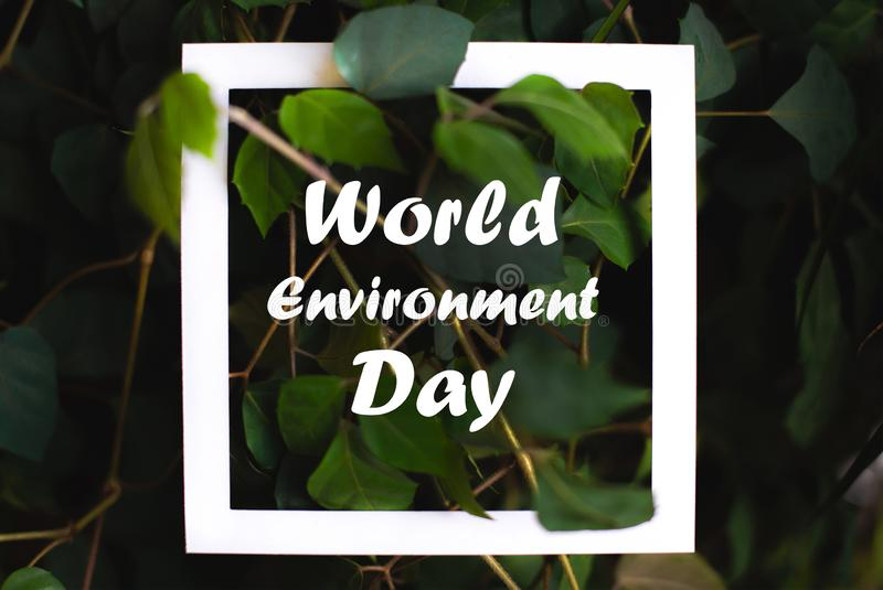 与世界环境日文本的方形的框架在绿色植物叶子背景 在自然题材的概念卡片  图库摄影