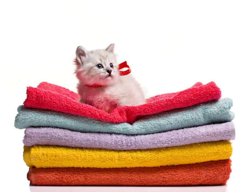 在毛巾的滑稽的小猫选址 库存图片
