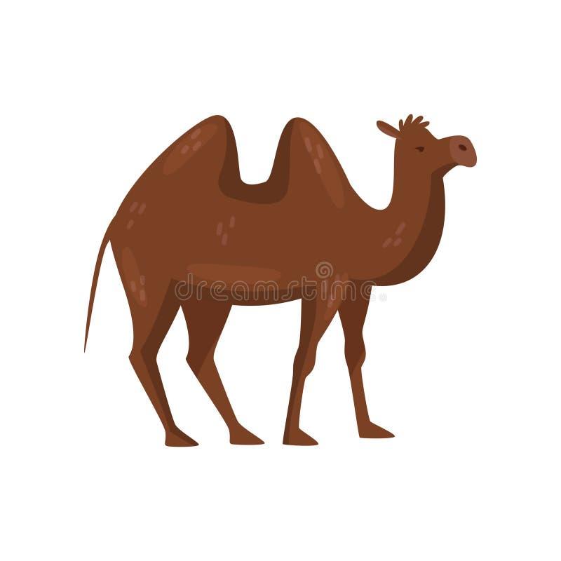 与两个小丘在后面,侧视图的布朗骆驼 沙漠哺乳动物的动物 儿童图书的平的传染媒介元素 皇族释放例证