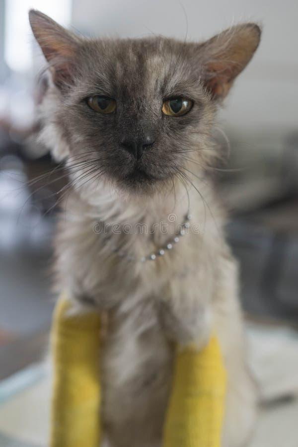 与两个断腿的资深猫 免版税库存图片