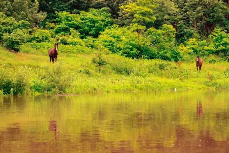 与两匹棕色马的温暖的五颜六色的风景 图库摄影
