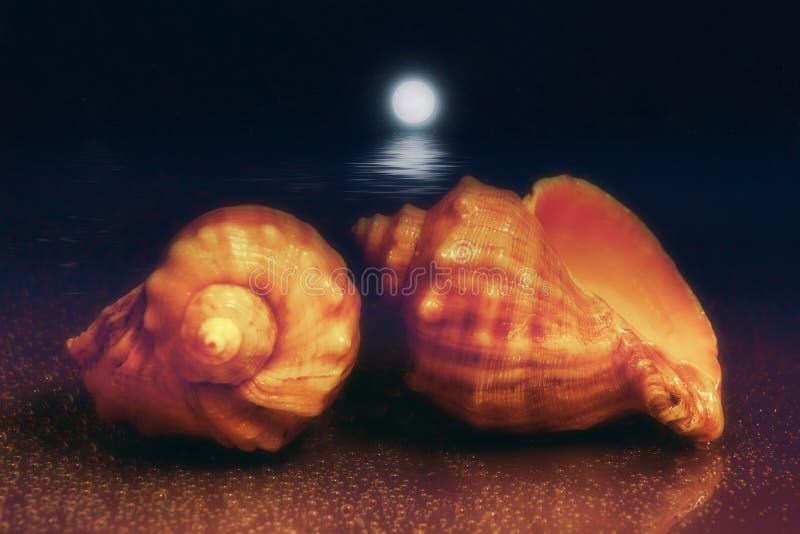 与两壳的月球夜海景在岸 月球行走 两rapana venosa 多血脉性的Rapana 免版税图库摄影