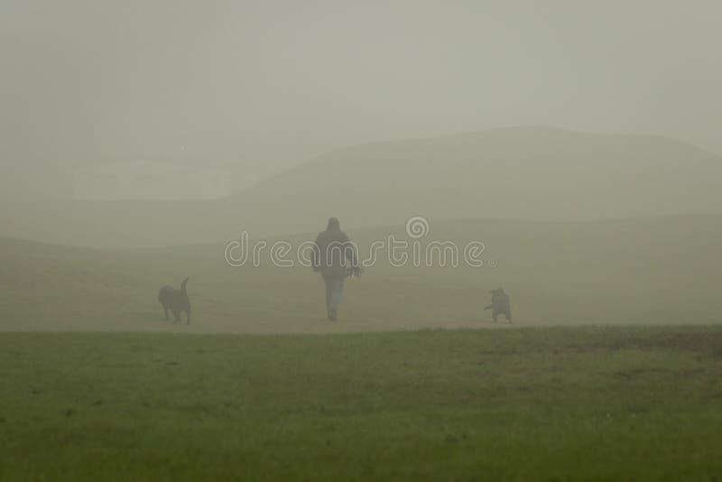 与两条狗的Dogwalker在雾的一个公园 库存图片