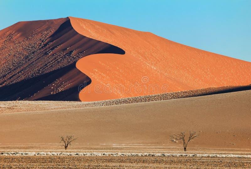 与两棵树的大红色沙丘在沙漠 免版税库存图片