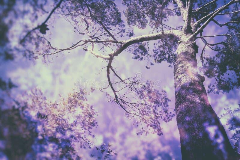 与两次曝光的紫外背景影响和在森林的抽象树 图库摄影