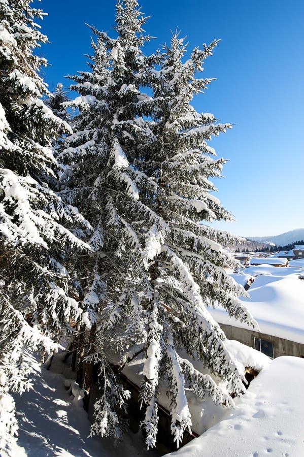与中国` s雪镇纯净的白色雪的树  图库摄影