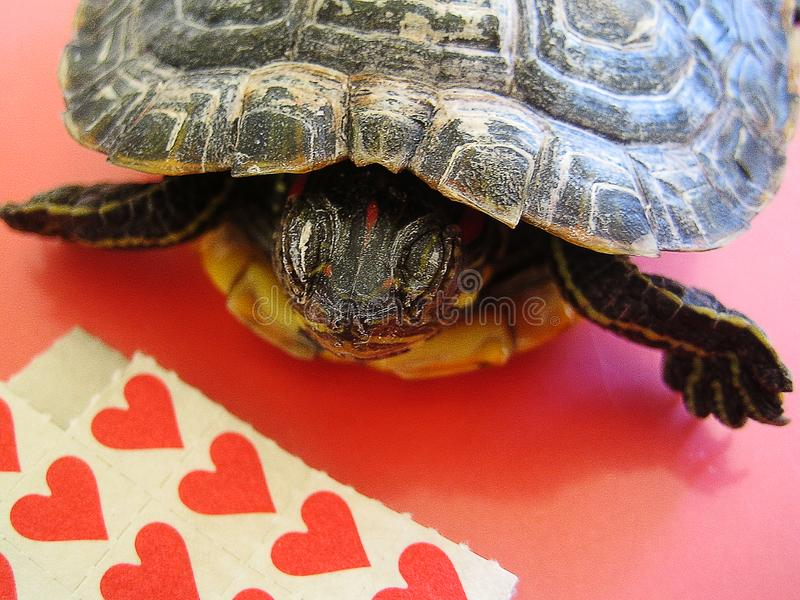 与乌龟背景宏观墙纸小字的Lsd小红色棍子纸 免版税库存图片