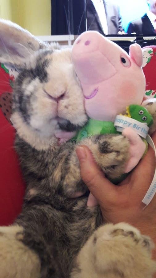 与乔治猪的兔子拥抱 免版税库存照片