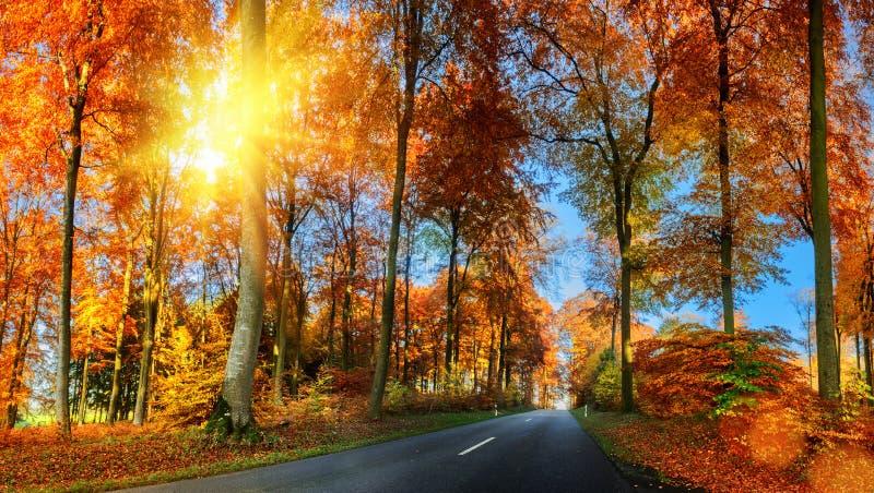 与乡下公路的秋天风景在橙色口气 自然Backgr 图库摄影