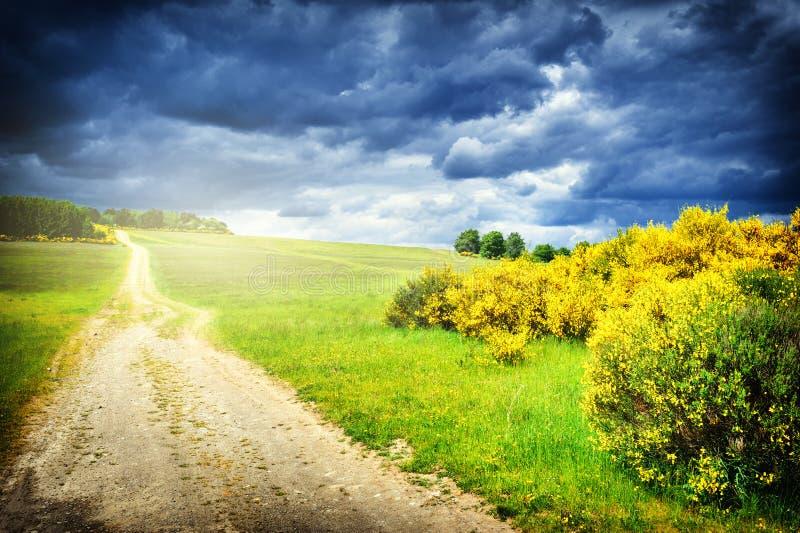 与乡下公路的美好的夏天风景 免版税库存图片