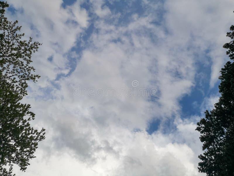 与云彩和树周围的天空蔚蓝 免版税库存图片
