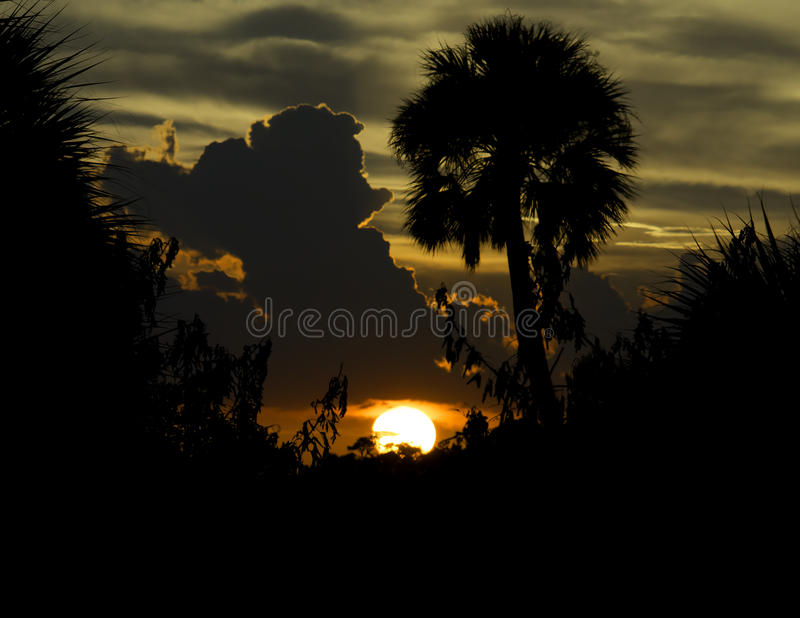 与云彩和棕榈树的日落在梅里特岛全国狂放 免版税库存照片