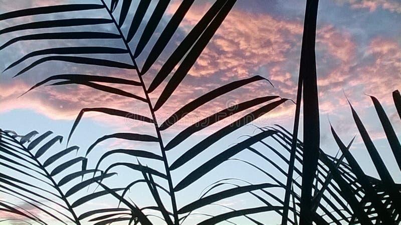 与云彩形成的清早日出 免版税库存图片