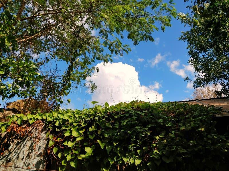 与云彩的绿色,晴朗,叶子和分支森林vibe 免版税库存照片