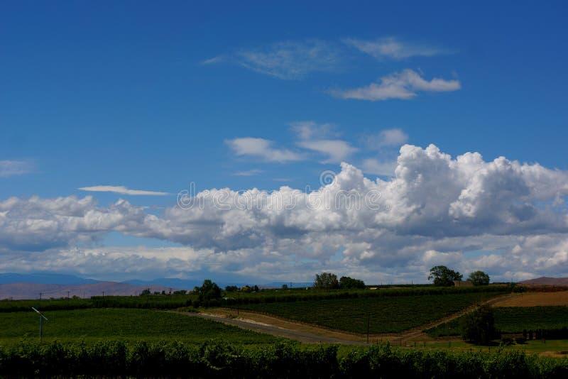 与云彩的酒乡风景在蓝天 免版税库存照片