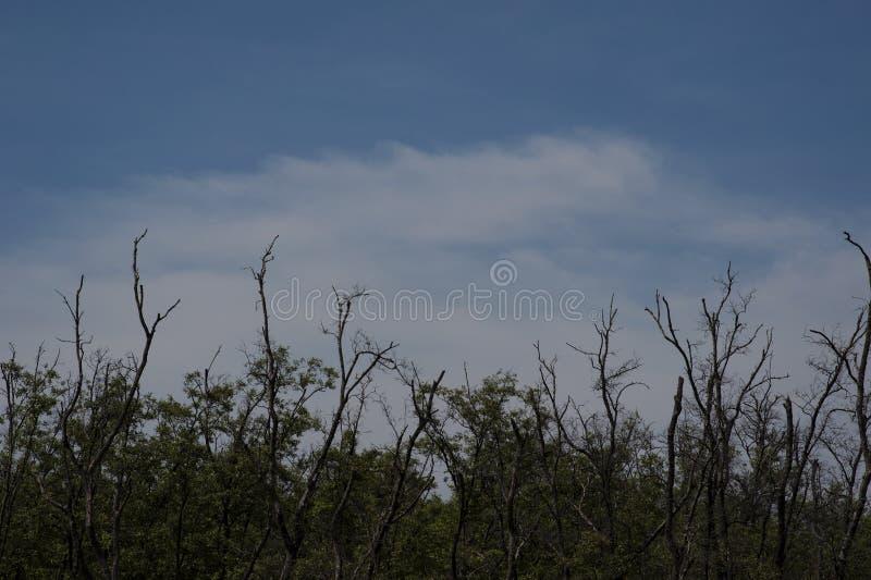 与云彩蓝天的树 免版税库存照片