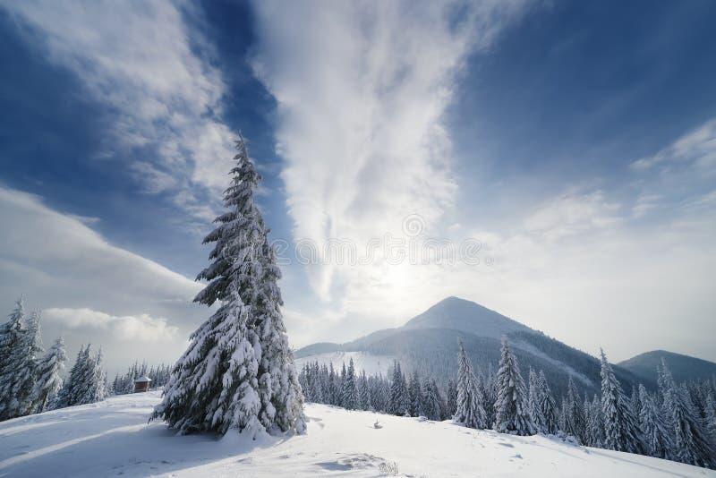 与云杉的圣诞节风景在山 免版税图库摄影