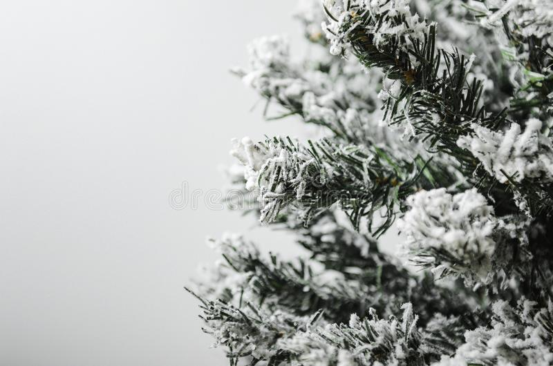与云杉的绿色冷杉分支和雪的白色背景 冬天心情 免版税库存图片