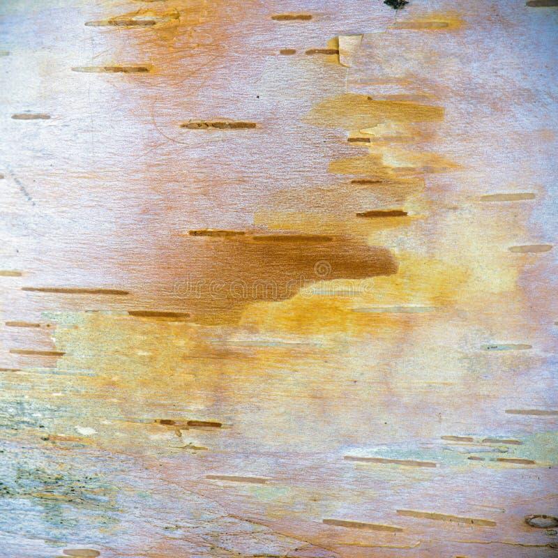与五谷和标号的桦树吠声自然纹理 免版税库存照片
