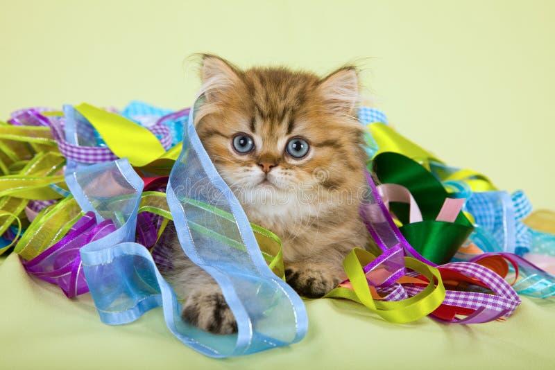 与五颜六色的丝带的逗人喜爱的猫 库存图片