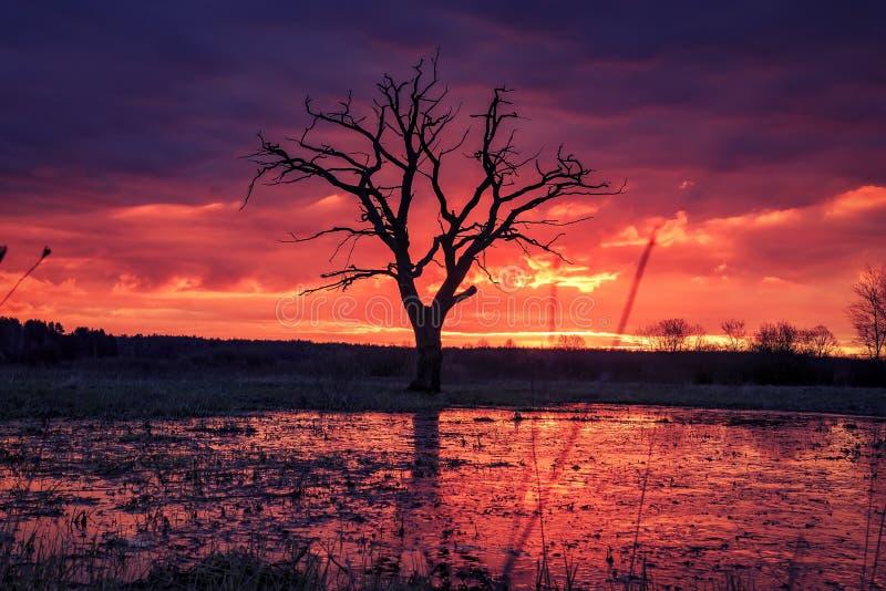 与五颜六色的多云天空的明亮的日出在河洪泛区的老树  风景春天风景在早晨 库存照片