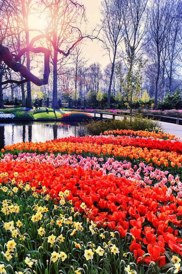 与五颜六色的季节性花的春天风景 库存图片