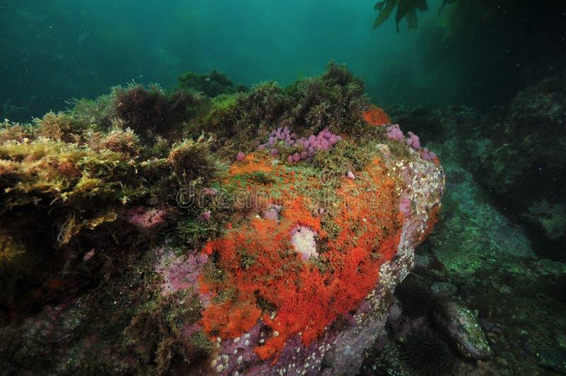与五颜六色的无脊椎的岩石 免版税图库摄影