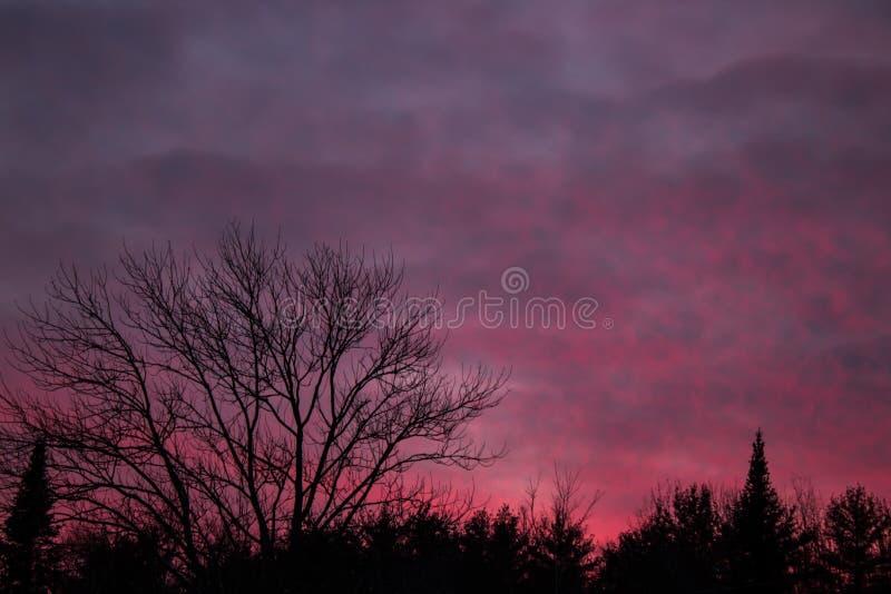 与五颜六色的日落的Treeline剪影 免版税库存照片