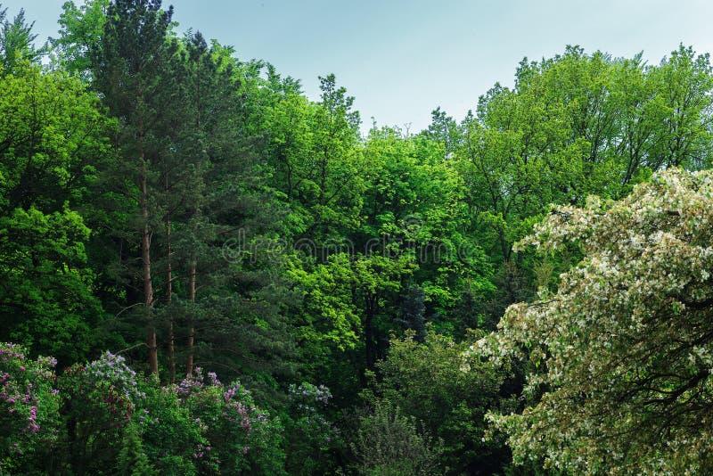 与五颜六色的树的夏天风景 由天空蔚蓝的美丽的绿色森林 库存照片