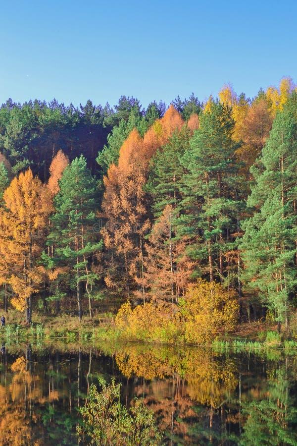 与五颜六色的森林五颜六色的叶子的秋天风景在有美丽的森林的湖红色和黄色颜色的 前面的秋天 免版税库存照片