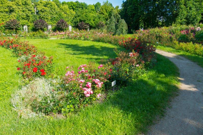 与五颜六色的玫瑰行的卷曲花床在反对绿色水多的草背景的一个植物园里 免版税图库摄影