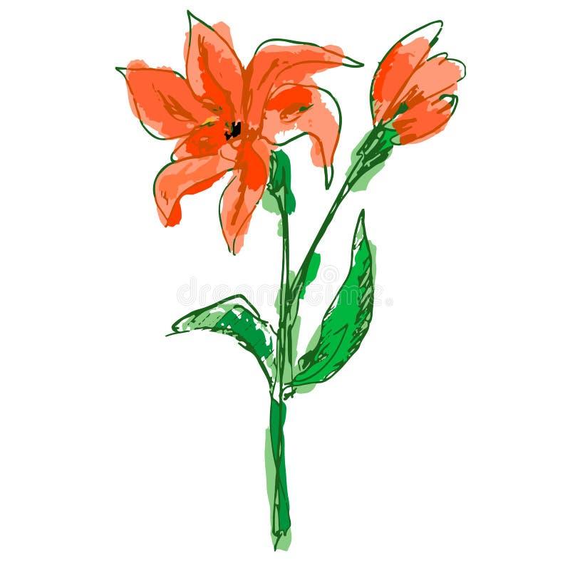 与五颜六色的瓣的明亮的珊瑚百合花,芽,绿色词根 向量例证