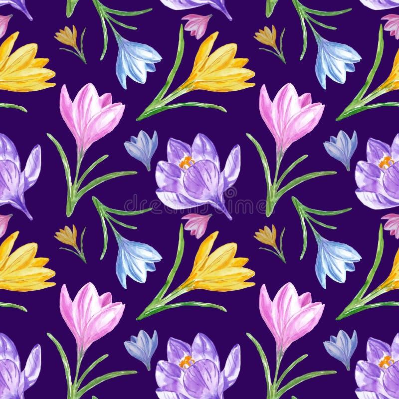 与五颜六色的番红花的水彩春天花卉无缝的样式在深紫色的蓝色背景 库存照片