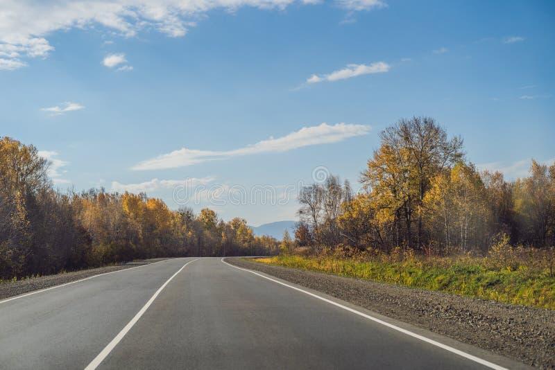 与五颜六色的秋天森林的令人惊讶的看法有沥青山路的 与空的路,树的美好的风景和 库存图片