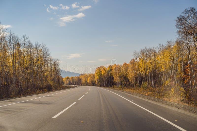 与五颜六色的秋天森林的惊人的看法有沥青山路的 与空的路,树的美好的风景和 免版税库存照片
