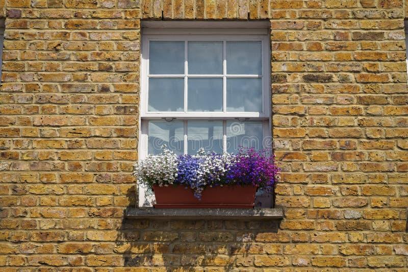与五颜六色的花的白色木制框架上下开关窗在砖墙大厦门面 库存图片