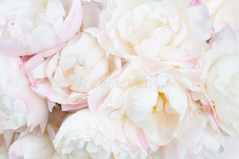 Download 与五颜六色的花的美好的花卉背景…背景 库存图片. 图片 包括有 户内, budd, 背包, 植物群, 粉红色 - 72365343