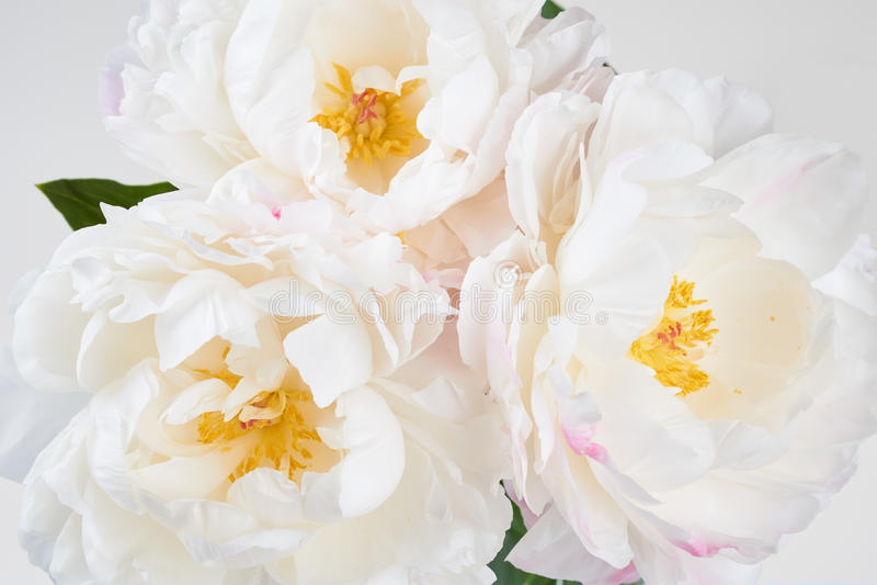 Download 与五颜六色的花的美好的花卉背景…背景 库存图片. 图片 包括有 花卉, 空白, 特写镜头, 新鲜, 关闭 - 72366755
