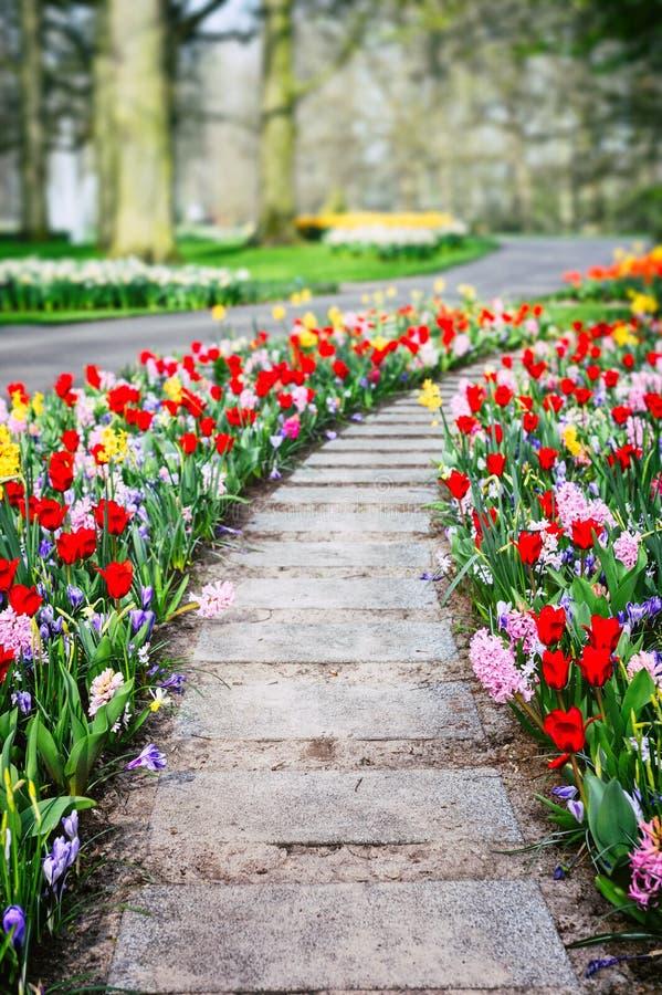 与五颜六色的郁金香和风信花的春天风景 免版税库存图片