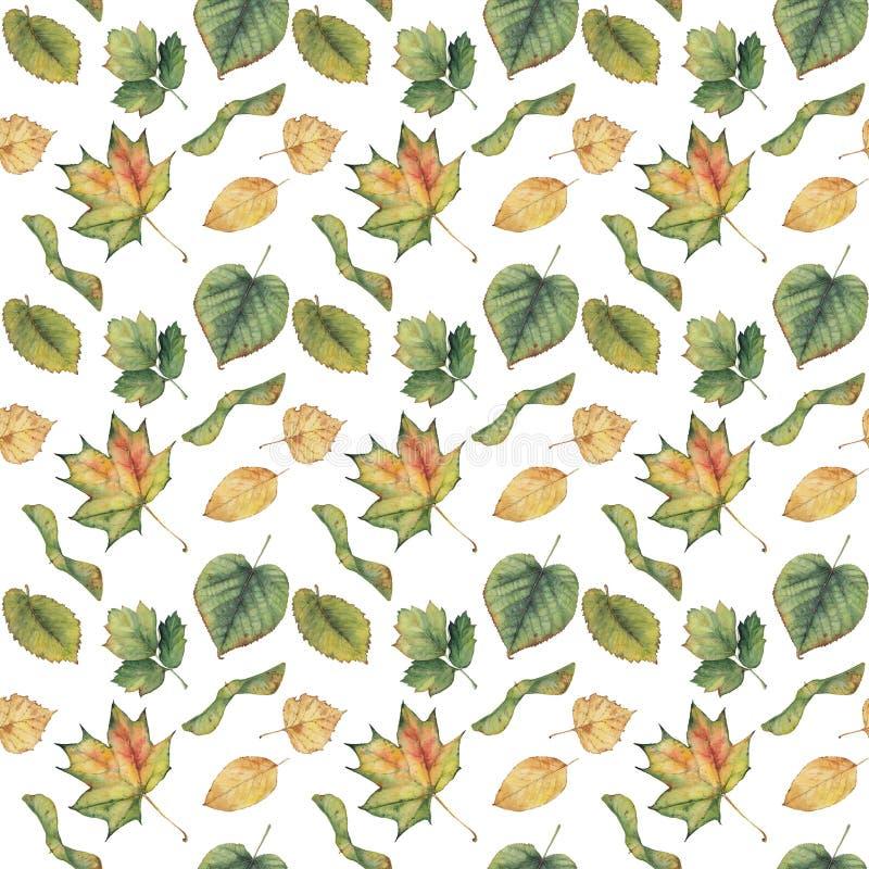 与五颜六色的绿色黄色秋叶的无缝的背景 向量例证