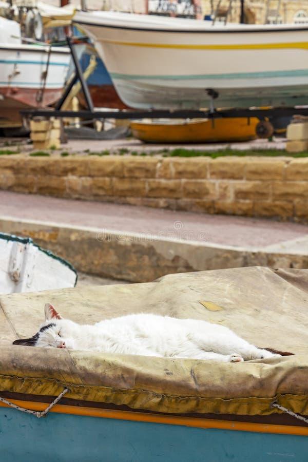 与交通事故多发地段的离群白色猫在睡觉在一条被盖的小船的头在Spinola海湾,圣朱利安` s,马耳他 图库摄影