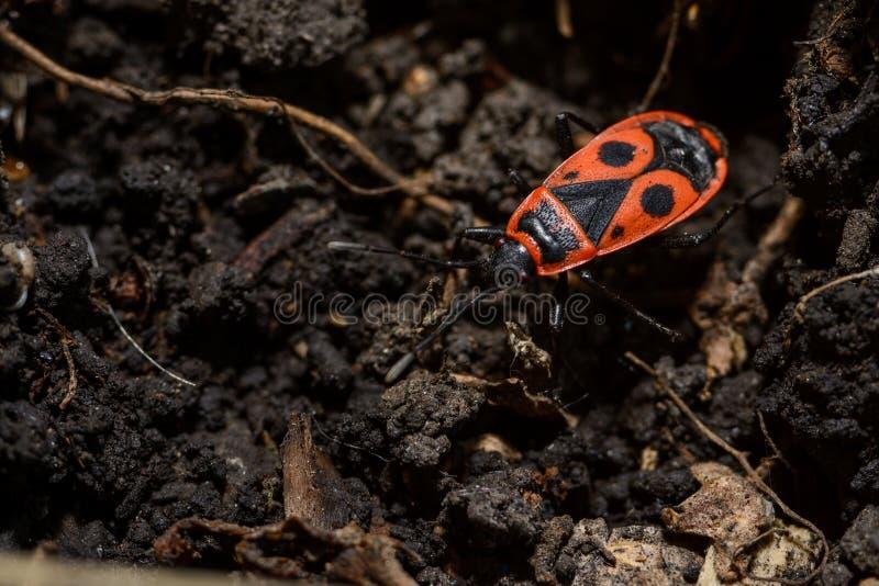 与交通事故多发地段的红色甲虫 免版税库存图片